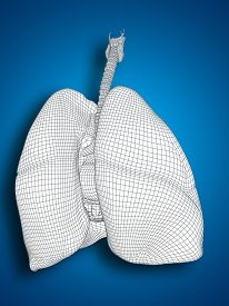 image of respiratory  - Concept or conceptual anatomical human man 3D wireframe mesh respiratory system  with lungs on blue background - JPG