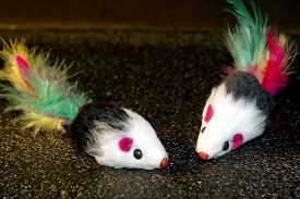 picture of field mouse  - Black mouse with colorful feathers toy for kittens.