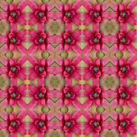 stock photo of bromeliad  - Bromeliad flower seamless pattern background - JPG