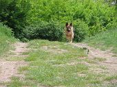 picture of shepherdess  - dog in the forest - JPG