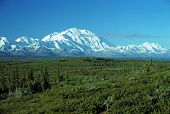 stock photo of denali national park  - This picture of Mt McKinley is taken from Wonder lake on a very clear day - JPG