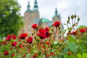 Roses Blooming In The Gardens Of Rosenborg Castle In Copenhagen, Denmark. Red Roses In The Small Gar poster