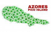 Vector Cannabis Pico Island Map Collage. Template With Green Weed Leaves For Cannabis Legalize Campa poster