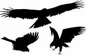 Silhouettes Of Eagles Flight