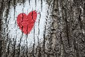 Hike Mark Painted On Tree Bark, Hiking Signs, Hiking Marks. White Circle And Red Heart - Hike Path S poster