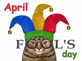 The Funny Cat Is Wearing A Jester Hat And Glasses. April Fools Day. White Background. Isolated. poster