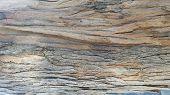 Australia Eucalyptus Tree Bark Textures, Gumtree Bark Background poster