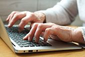 Mature Female Hands Typing Text On Keyboard, Senior Elderly Business Woman Working On Laptop, Old Or poster