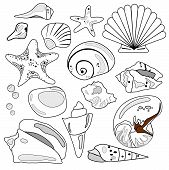 Sea Shell Collection.Eps