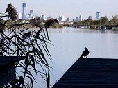 LYNDHURST, NJ-SEPT 11: Een vogel in silhouet zit op een pier met 110 latten vertegenwoordigt elke brandstof