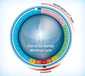 stock photo of ovulation  - Circular flow chart with shiny center with a female figure showing the average number of days days in a menstrual cycle and the period on menstruation and ovulation - JPG