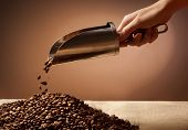 Hand holding steel scoop and coffee beans