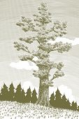 Woodcut Giant Cedar Tree