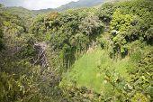 Rain Forest On Tropical Island