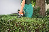 stock photo of electric trimmer  - A man trimming hedge in city park - JPG