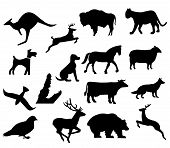 Assorted Animal Silhouettes poster