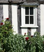 Window and rose bush
