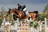 Pferdesport grand Prix Susan Artes presto b
