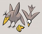 Funny cute Birds