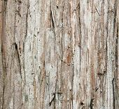 Wood tree texture background pattern