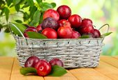 Ripe plums in basket on wooden table on natural background