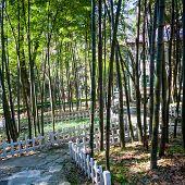 Постер, плакат: дорожка пройти через бамбуковый лес в Японии