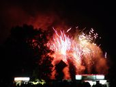 Fireworks Exploding Behind Trees