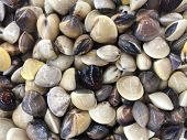 stock photo of clam  - A closeup of Clams in market Thailand - JPG