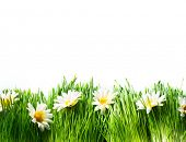 Spring Meadow with Daisies. Grass and Flowers border art Design isolated on White. Nature. Environme