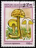Postage Stamp Guinea 1995 Leccinum Nigrescens, Mushroom