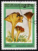 Postage Stamp Guinea 1995 Yellow Foot, Mushroom