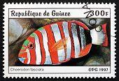 Postage Stamp Guinea 1997 Harlequin Tuskfish