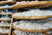stock photo of lats  - Silk cocoons - JPG