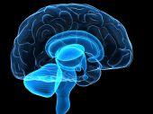 human brain parts