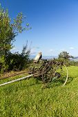 old unused agricultural machine standing on green grass
