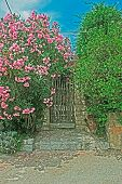 Gate And Flowers