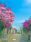 Oleanders By The Street