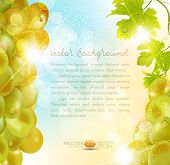vector background with grapes