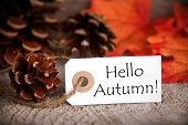 Tag With Hello Autumn