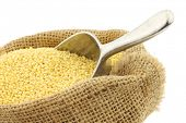 Millet in a burlap bag with an aluminum scoop on a white background