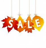 Sale Autumn