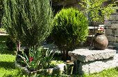 Corner of home garden