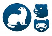 pic of ferrets  - Ferret blue vector signs on the white background - JPG