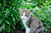 Young kitten in garden