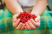 Male Hands Holding Red Currant Fruit Fresh Air