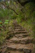 Stairway Into The Wildness