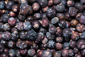 Dried Juniper Berries Background Image