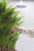 Closeup of a scientist conducting test on plants against white background