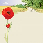 Summer landscape with red poppies