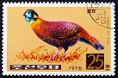 Postage Stamp North Korea 1976 Copper Pheasant, Bird